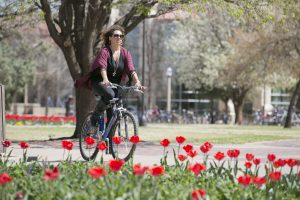 Student riding bicycle on campus during with red tulips in the background. Planting red tulips on campus in the spring is a Texas Tech tradition.